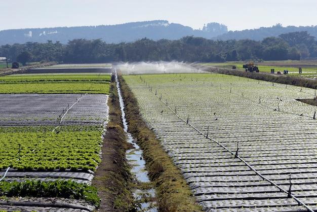 Ирригационная система в действии при посадке овощей