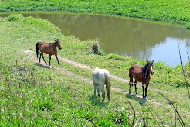 Лошади рысят у берегов голубой реки