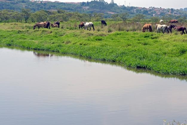 Лошади пасутся на берегу голубой реки