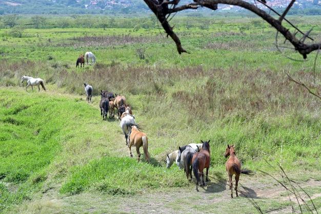 Лошади, идущие по грязной тропе