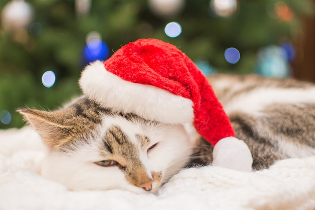 Котенок в шапке санта-клауса под елку.