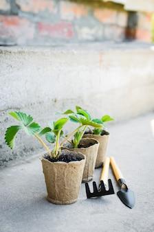 園芸工具とイチゴの植物。