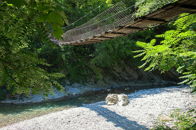 森の小さな山川に架かる木製の橋を中断