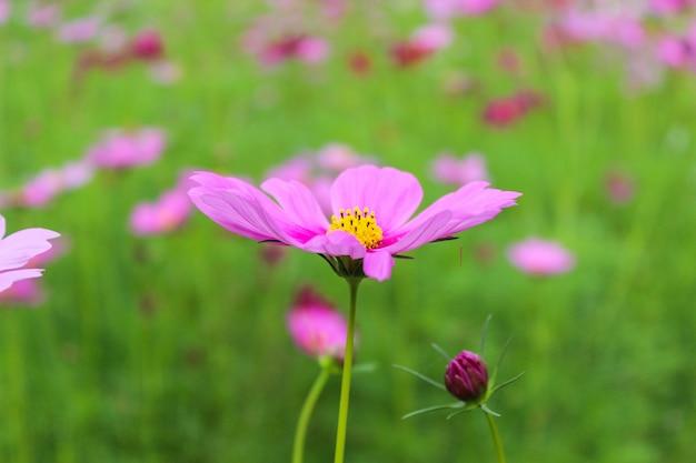 ピンクの花夏の背景