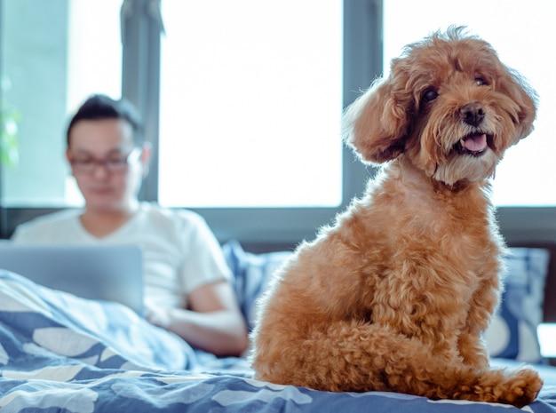 楽しんで幸せなときにカメラを見て愛らしい茶色のプードル犬