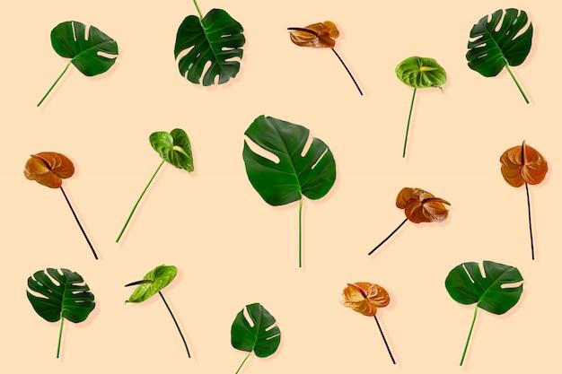 カラフルなアンスリウムの花とモンステラの葉。