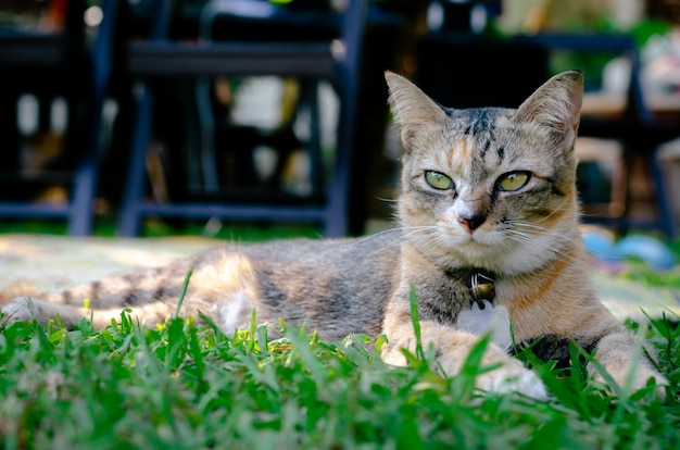 美しい愛らしいヒョウ色の猫。