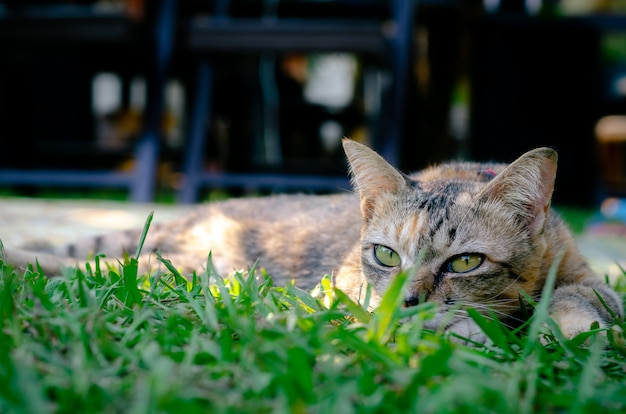美しい愛らしいヒョウ色猫は草の上に横たわる