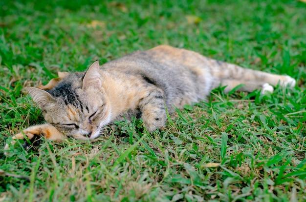 猫は草の上にリラックス。