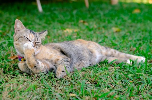 猫はリラックスして彼女の足を掃除します。
