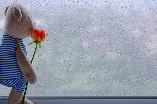テディベアはバラを保持していると窓から外を見て窓に立っています。