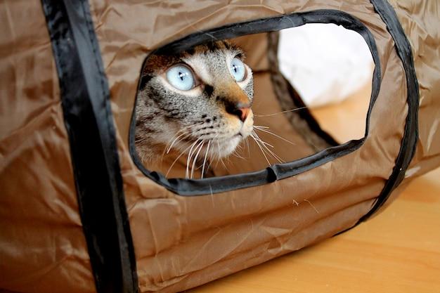 チューブの中の猫