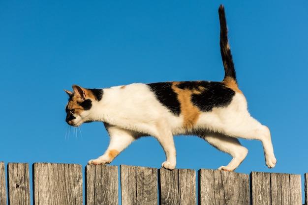 青い空にフェンスの上を歩く猫。