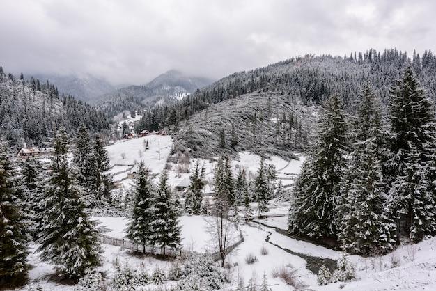 ルーマニアの強いハリケーン風の後の針葉樹林の倒木。