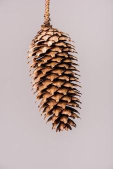 灰色に分離された円錐形と松の小枝