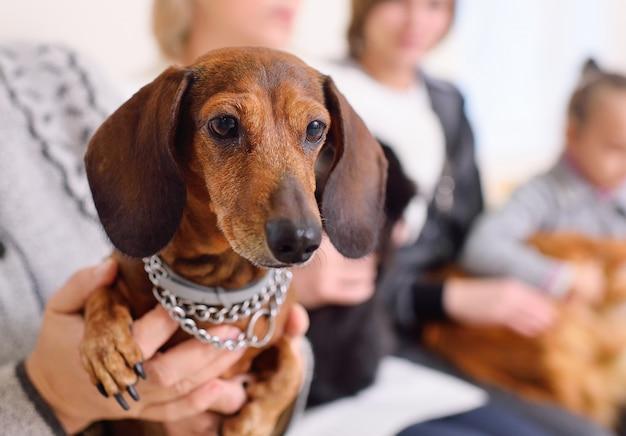 Люди со своими питомцами ждут медицинского осмотра в ветеринарной клинике. здоровье животных