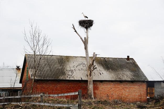 村の古い家の背景に乾燥した木の上の巣のコウノトリ