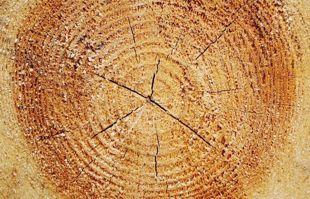 Крупным планом резать древесину
