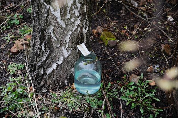 バーチ樹液の生産