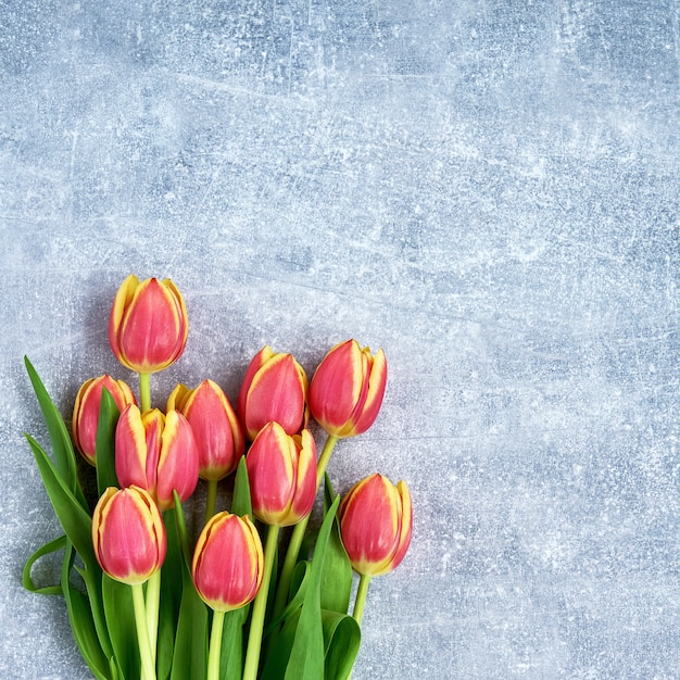 青い背景に赤いチューリップの花束。スペース、トップビューをコピーします。休日の背景