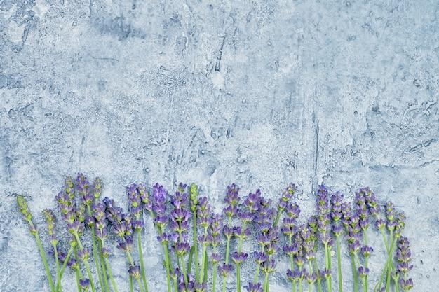 青色の背景にラベンダーの花。コピースペース、トップビュー。