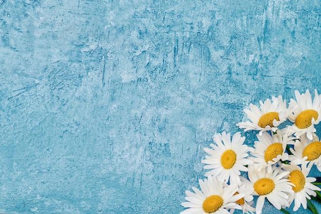 Летом. цветок белой маргаритки на сини.
