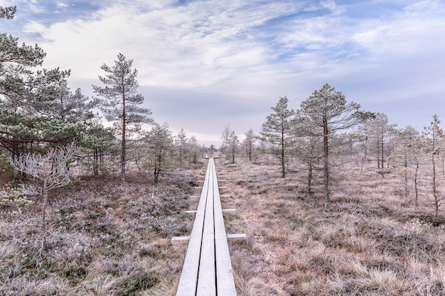 盛り上がった沼地、凍った植物、霜の霜の遊歩道。ケメリ、ラトビアの国立公園
