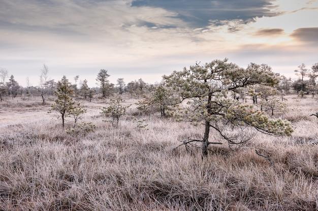 沼地の凍りつくような朝、凍った植物、霜の霜。ケメリ、ラトビアの国立公園
