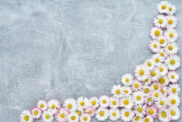 休日の背景。デイジーの花はコンクリートの灰色の背景の境界線。コピースペース、トップビュー。