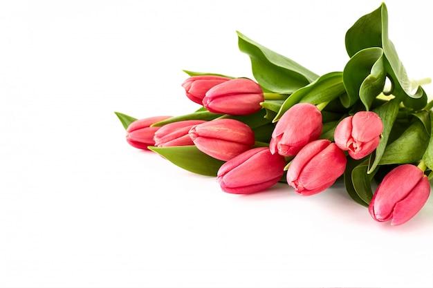 白地にピンクのチューリップの花束。