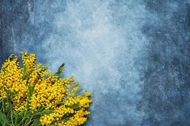Мимоза цветы букет на синем фоне. копирование пространства, вид сверху.