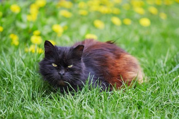 Бездомный черный кот с обрезанным ухом сидит на траве
