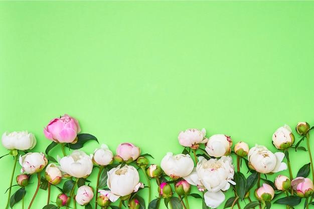 緑色の背景で白とピンクの牡丹