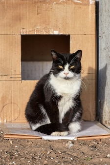 Черная бездомная кошка с обрезанным ухом сидит перед коробкой и смотрит в камеру