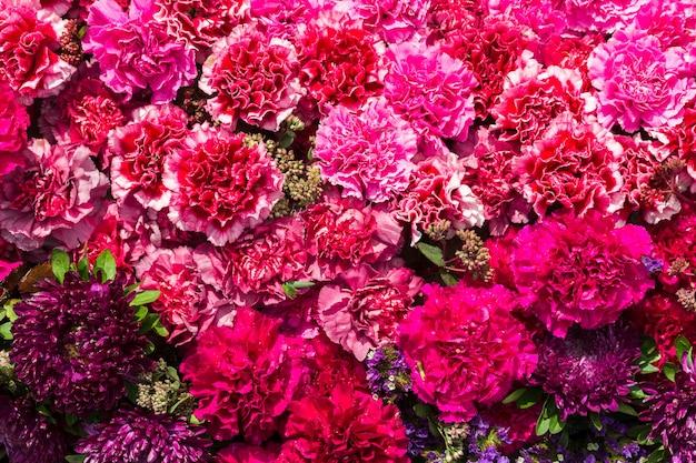 Разноцветные цветы гвоздики