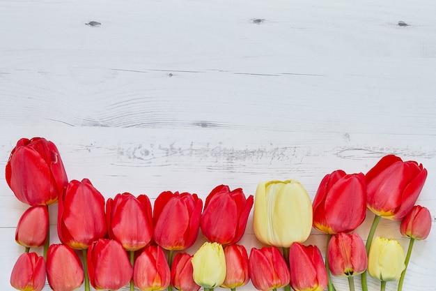 白地に赤いチューリップの罫線。コピースペース、上面図。母の日。