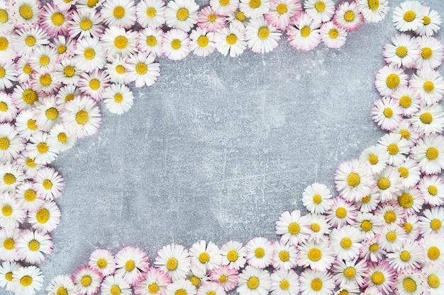 灰色のコンクリートのデイジーの花のフレーム