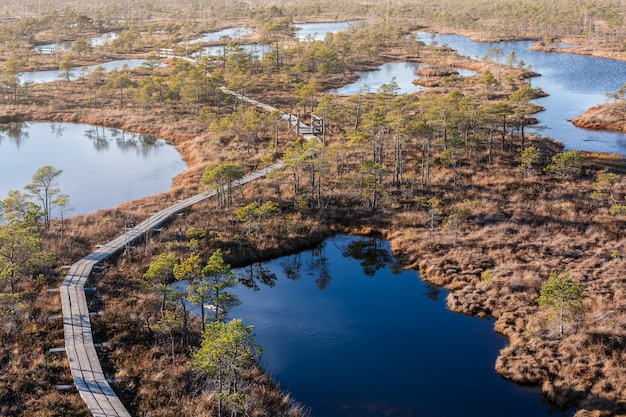 沼地を上げた。ラトビア、ケメリ国立公園の遊歩道。夏。