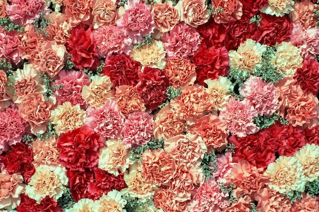 カラフルなカーネーションの花の背景。