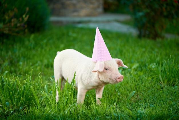 緑の草の上にピンクのお祝いキャップ立ってかわいい貯金箱。