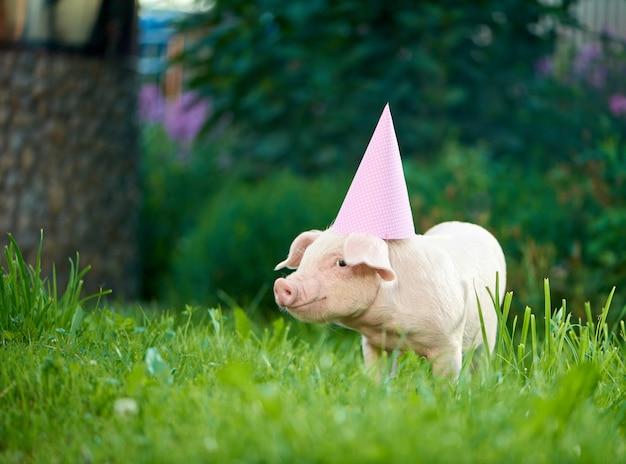 ピンクのお祝いキャップを着て緑の芝生の庭で貯金箱に立っています。