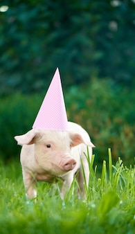 ピンクのお祝いキャップを着て緑の芝生の庭に立っている貯金箱の肖像画。