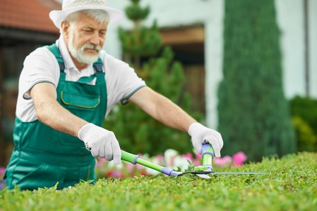 素敵な庭で緑の茂みを切る年配の男性のクローズアップ。