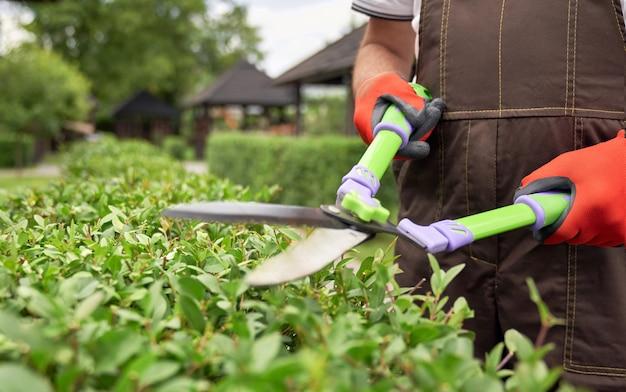 茂みを刈る人の手ではさみ。