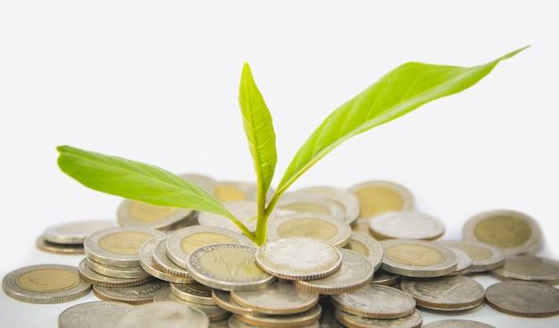パイルシルバーコインとツリートップ成長