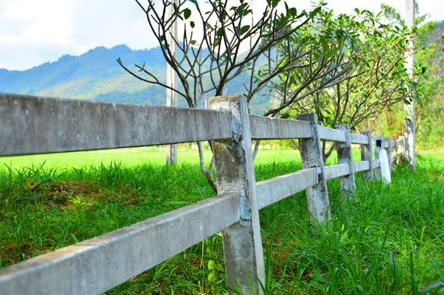 ブルーリッジ山脈とブドウ園