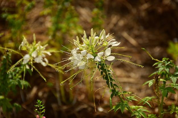 庭の雨滴と白い花