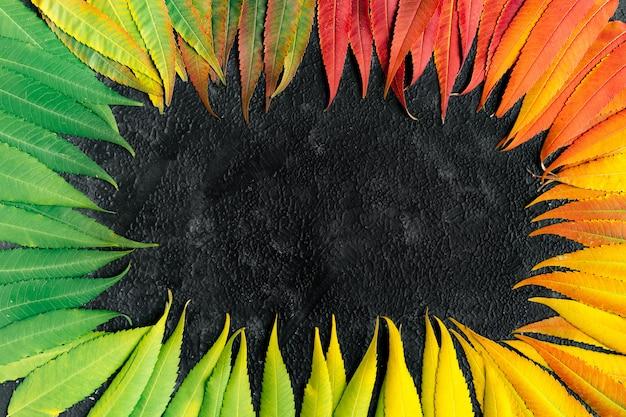 Осенние разноцветные листья на черном фоне с копией пространства