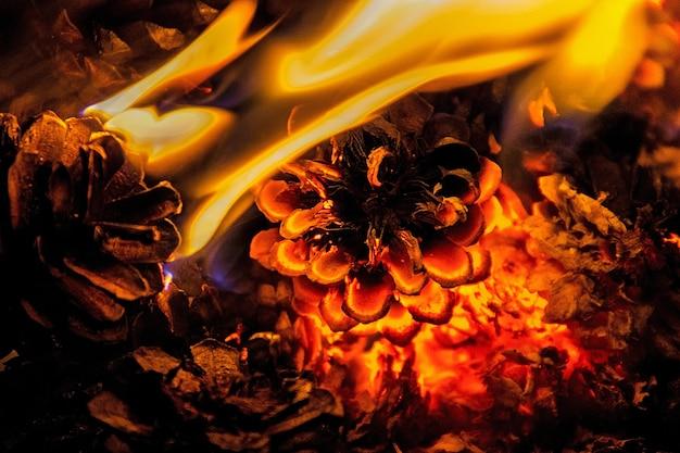 マツ円錐形で火にクローズアップ