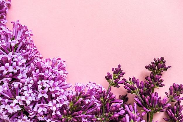 テキストのコピースペースとピンクの背景にライラックの咲く枝からの境界線。コンセプトこんにちは春、女性の日